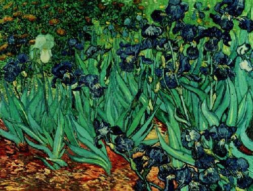 Vincent van Gogh art print 'Irises in Garden' landscape prints by King and McGaw